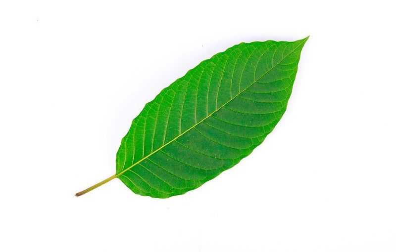Kratom Fallen Leave Aids You Get Your Desires